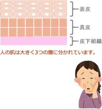 人の肌は大きく3つの層に分かれています。
